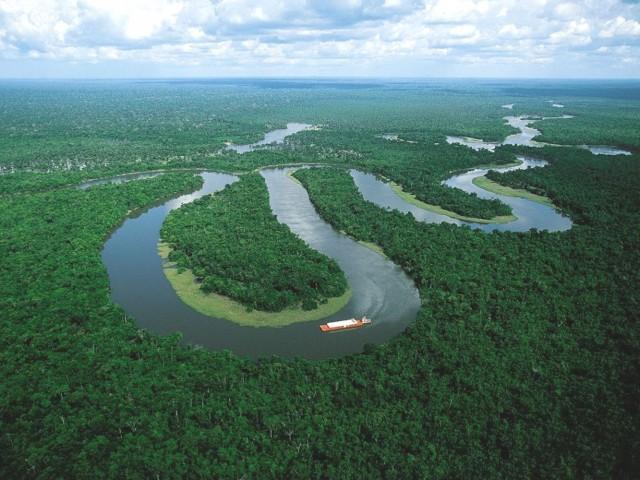 Amazones lietus meži