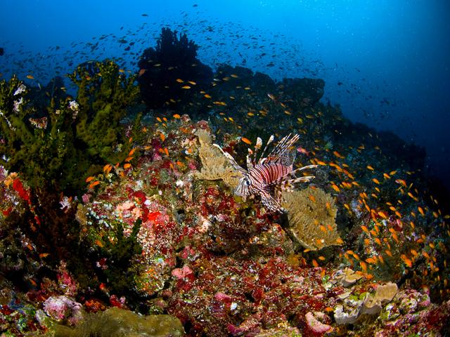 Indonēzijas apskates objekti Pulau Weh daivings niršana